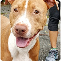 Adopt A Pet :: Calvin - Key Largo, FL