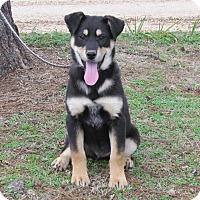 Adopt A Pet :: MALIIK - Hartford, CT