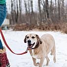 Adopt A Pet :: BOOMER