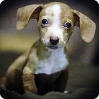 Adopt A Pet :: Reece's - Weatherford, TX