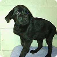 Adopt A Pet :: Winchester - River Falls, WI