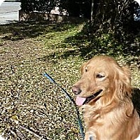 Adopt A Pet :: Murphy - Mission Hills, CA