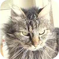 Adopt A Pet :: Nudge - Davis, CA