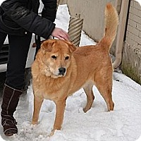 Adopt A Pet :: Jase - Hamilton, ON