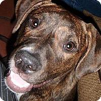 Adopt A Pet :: Latte - Phoenix, AZ