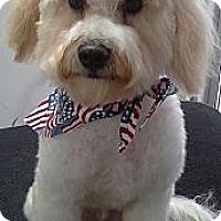 Adopt A Pet :: Nelson - Cincinnati, OH