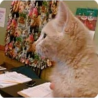 Adopt A Pet :: Nick - Erie, PA