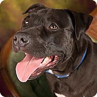 Adopt A Pet :: Duncan - Eugene, OR