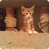 Adopt A Pet :: Julian - Modesto, CA