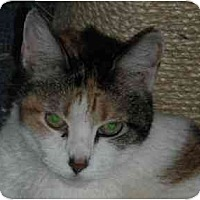 Adopt A Pet :: Cinnamon - Lombard, IL