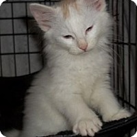 Adopt A Pet :: Spencer - Acme, PA