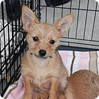 Adopt A Pet :: Callie - Albany, NY