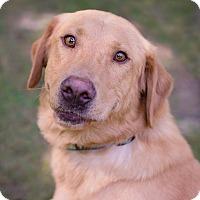 Adopt A Pet :: Ashton - Lewisville, IN