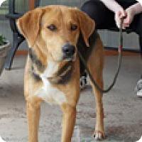 Adopt A Pet :: Half Pint - Hatifeld, PA