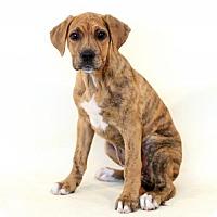 Adopt A Pet :: Argentina - Bloomington, MN