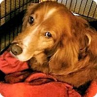 Adopt A Pet :: Moxie - Davenport, IA