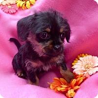 Adopt A Pet :: Felicity - Irvine, CA
