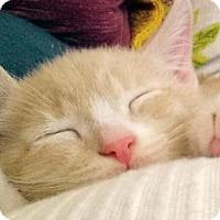 Adopt A Pet :: Franklin - Walnut Creek, CA