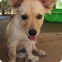 Adopt A Pet :: EVERETT - Williston Park, NY