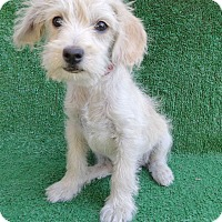 Adopt A Pet :: Yueki - San Diego, CA