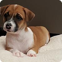 Adopt A Pet :: Reesie - Atlanta, GA