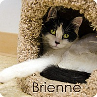 Adopt A Pet :: Brienne - Hamilton, MT