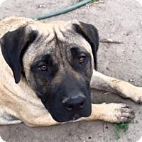 Adopt A Pet :: *Courtesy Post* - Clarkston, MI