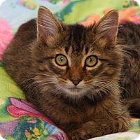 Adopt A Pet :: Caramel - Joplin, MO
