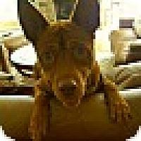 Adopt A Pet :: Duke - Foster, RI