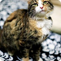 Adopt A Pet :: Kathryn - Appleton, WI