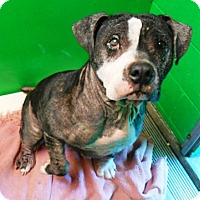 Adopt A Pet :: Jess - Redding, CA
