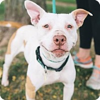 Adopt A Pet :: Horus - Cleveland, OH