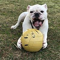 Adopt A Pet :: Trooper - Decatur, IL