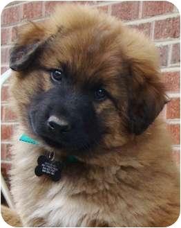 Wyatt -Pending Adoption | Adopted Puppy | Oklahoma City ...