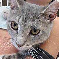 Adopt A Pet :: Allegro - Riverhead, NY