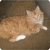 Adopt A Pet :: Bella Bellisima - McDonough, GA