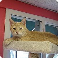 Adopt A Pet :: Clark - Memphis, TN
