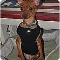 Adopt A Pet :: Pogo - Minneapolis, MN
