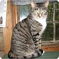 Adopt A Pet :: Caillista - Portland, ME