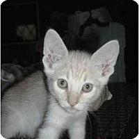 Adopt A Pet :: Kai - Irvine, CA