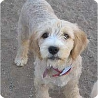 Adopt A Pet :: Ruby - Golden Valley, AZ