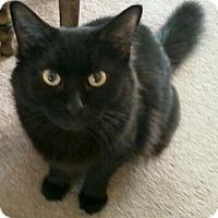 Adopt A Pet :: Nancy - Springfield, PA