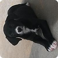 Adopt A Pet :: Gunnar - Marietta, GA