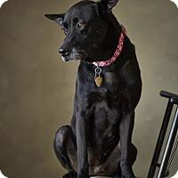 Adopt A Pet :: August - Santa Monica, CA