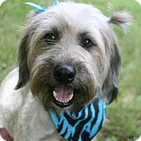 Adopt A Pet :: Sophie - Lufkin, TX