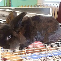Adopt A Pet :: Scruffles - Conshohocken, PA