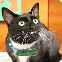 Domestic Shorthair Cat for adoption in Greensboro, Georgia - Teddy