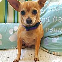 Adopt A Pet :: Tinkerbell - Fennville, MI