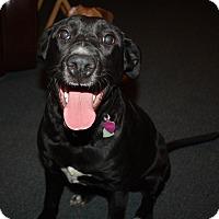 Adopt A Pet :: Zoe - Homer, NY