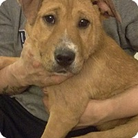 Adopt A Pet :: Astrid - New Oxford, PA